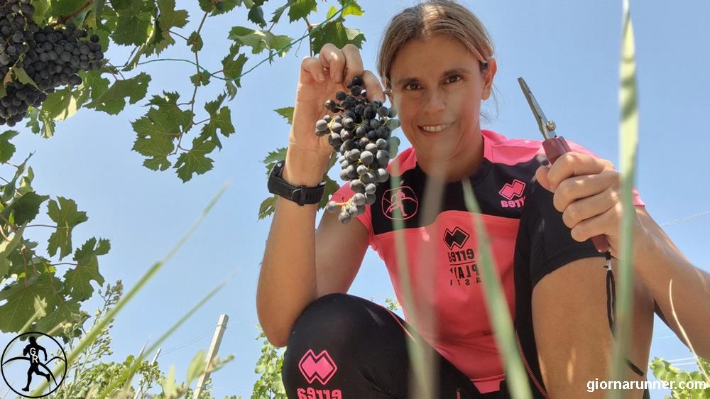 Vendemmia Didattica tra Langhe, Monferrato e Roero: un nuovo modo per vivere il territorio