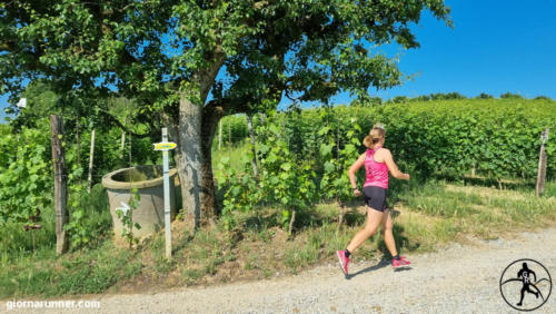 Scollinando tra Vini e Tartufi - San Damiano d'Asti